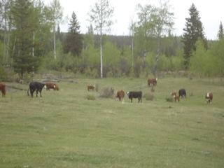 Twilight Ranch