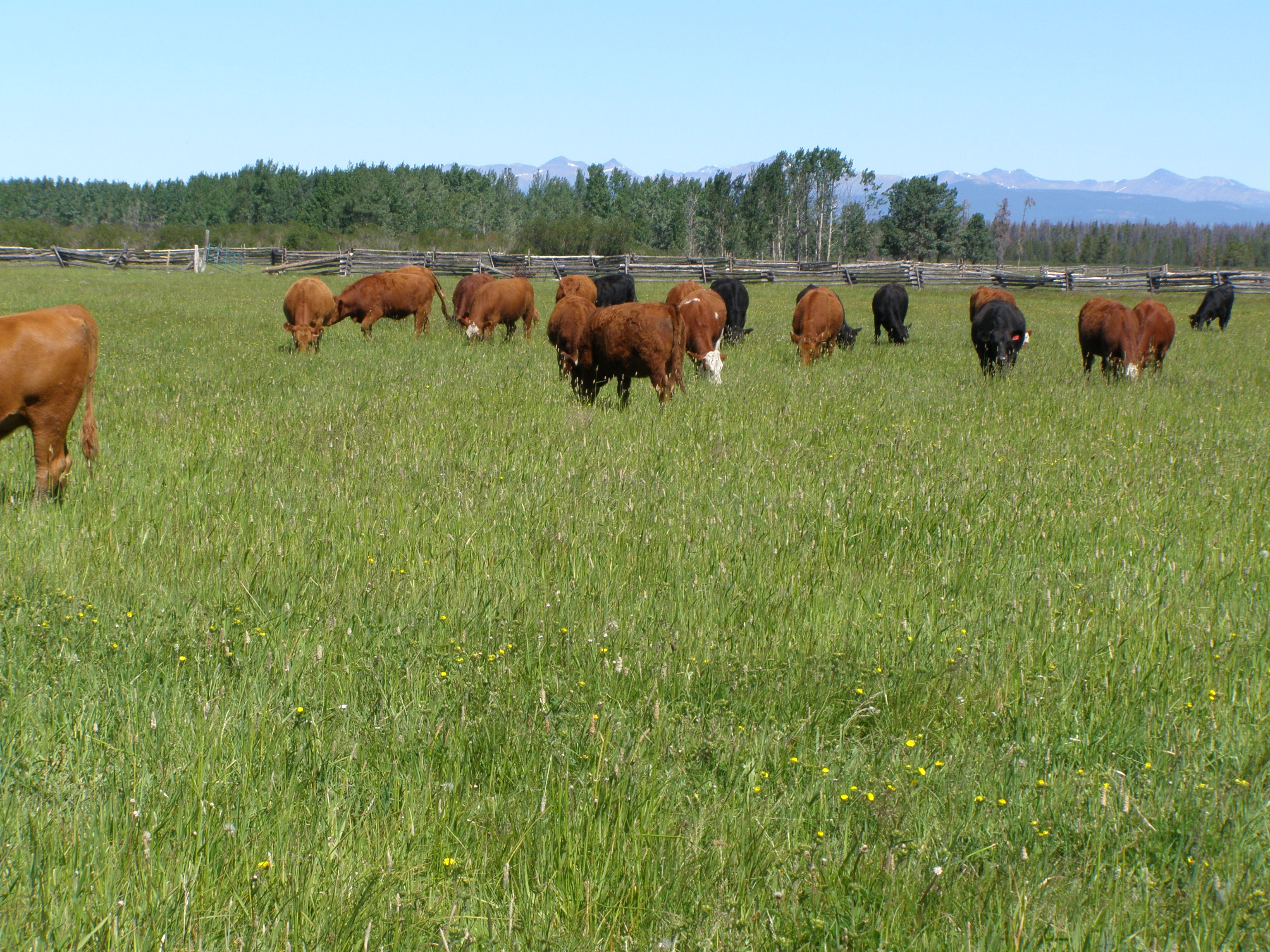 Guichon Creek Ranch > Anahim Lake, BC   1500 Acres Freehold Land / 2500 Acres Lease Land   3 Cattle Yard Sites   Irrigated Hay Production   Crown Range Out Gate