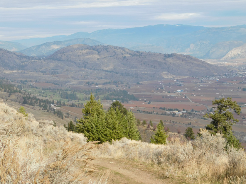 4764 Wildrose Street > Oliver, BC  | 228 Acres | Ranch House | Commercial Potential for Vineyard Estate!